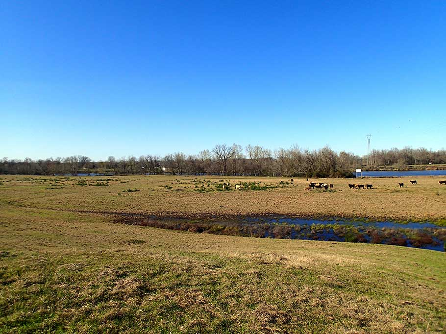 bluegrass river crossing pasture